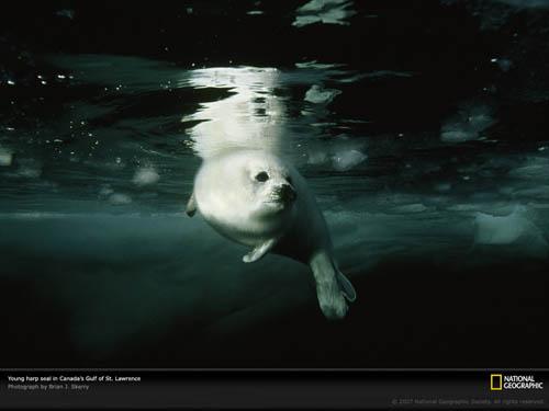 Підводний світ від national geographic