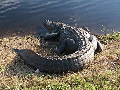 Фото з сайту www animalworld ru